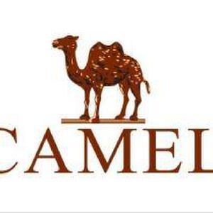 Camel骆驼